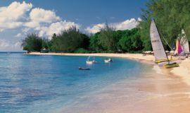 Coral Reef Acentro Barbados